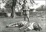 Охота на тигров-людоедов